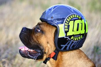 Helmet dog